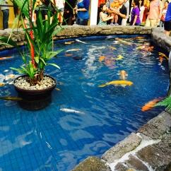 fish pond at ala moana mall hawaii