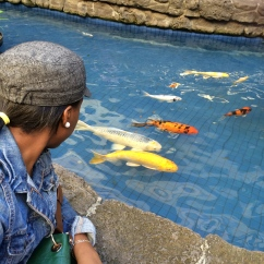 fishes at ala moana shopping center hawaii