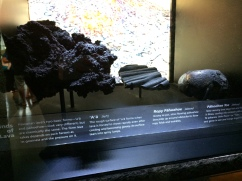Kinds of Lava Bishop Museum Hawaii